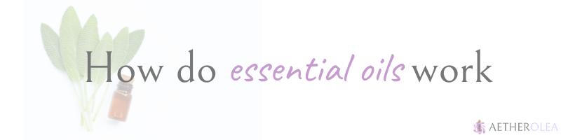 how essential oils work